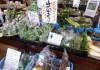 たかの山菜