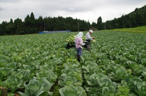 神鍋高原のキャベツ畑