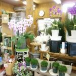 お米と花の生産直売 ナーセリー上野03