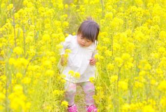 s30-笠岡ベイファーム・ステキな黄色♪(岡山)