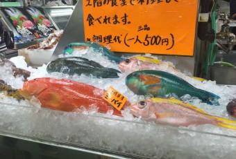 s-綺麗なお魚(りこ)